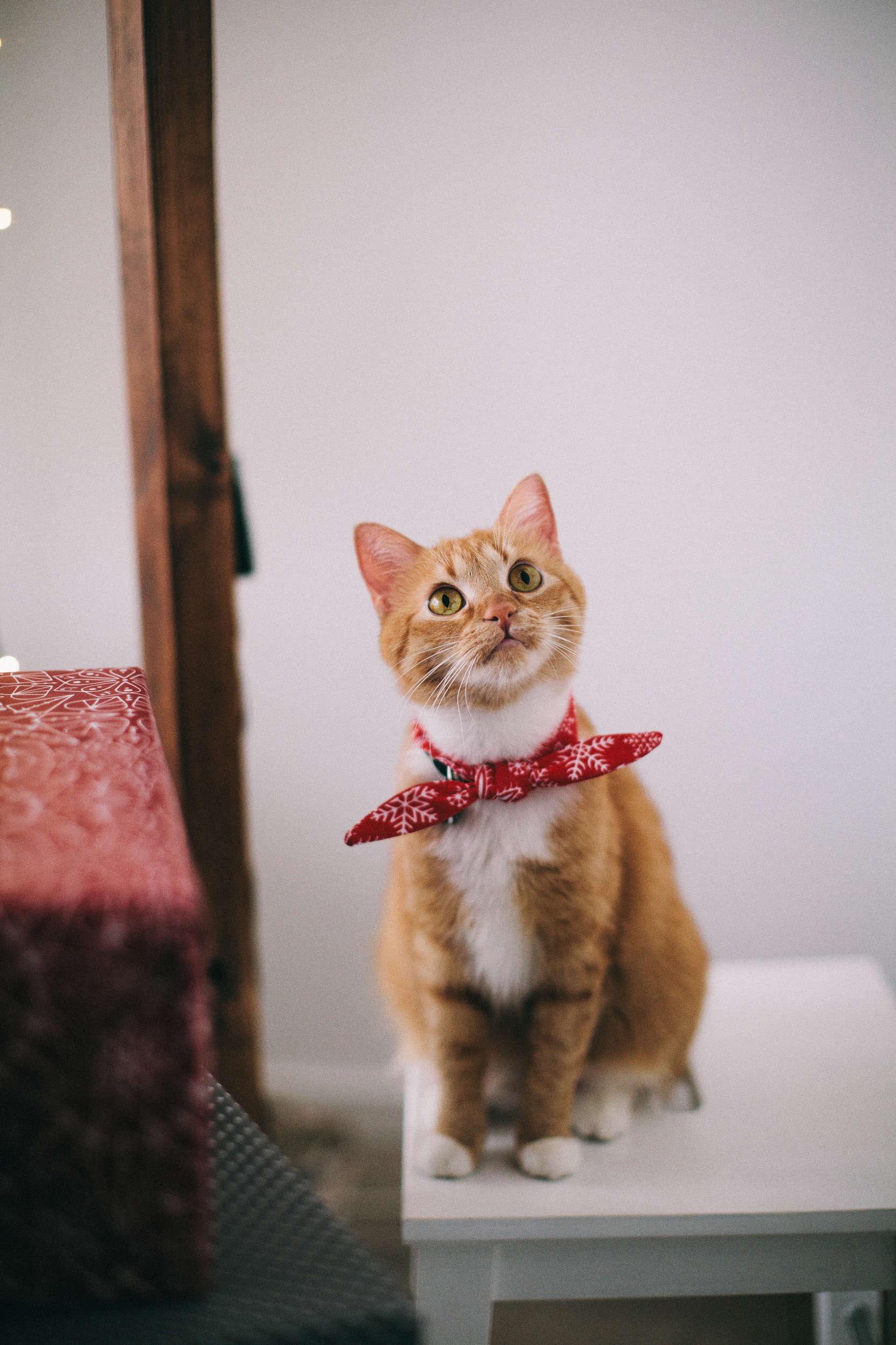 Encryption Cat